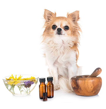 A dog with some compound medicines in front of him